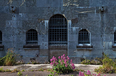 Wild Valerian Near Prison Walls In Fort Art Print