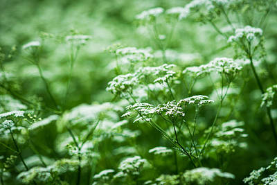 Porridge Photograph - Wild Vegetation by Alexander Senin