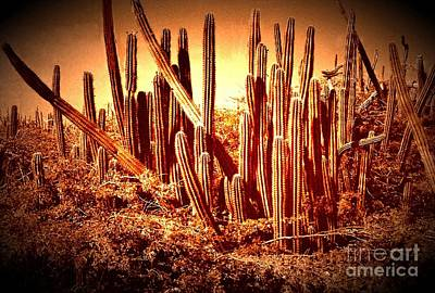 Photograph - Wild West IIb by Anita Lewis