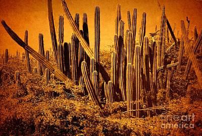 Photograph - Wild West IIib by Anita Lewis