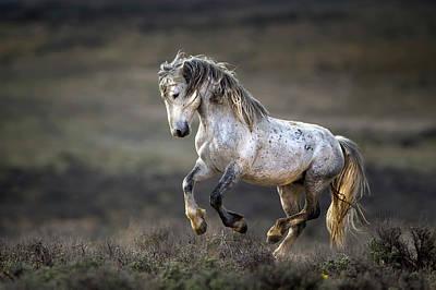 Horse Run Photograph - Wild Wild West by