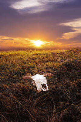 Cow Skull Photograph - Wild Wild West by Aged Pixel