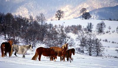 Photograph - Wild Winter  by Svetoslav Sokolov
