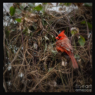 Photograph - Wildbird In Red by Tamera James