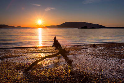 Driftwood Photograph - Wildcat Cove by Alexis Birkill