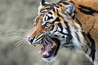 Photograph - Wildcat II by Athena Mckinzie