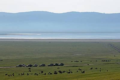 Photograph - Wildebeest In Ngorongoro Crater by Tony Murtagh