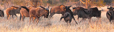 Pop Art Rights Managed Images - Wildebeest run Royalty-Free Image by Jan Van der Westhuizen