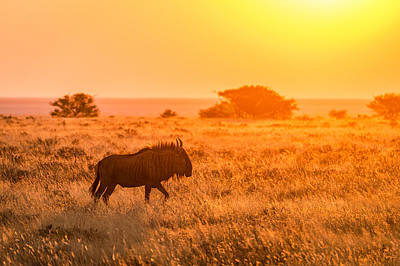 Wildebeest Sunset - Namibia Africa Photograph Print by Duane Miller