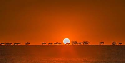 Masai Mara Photograph - Wildebeests Walking In Golden Light by David Hua