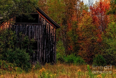 Wilderness Barn Print by Brenda Giasson