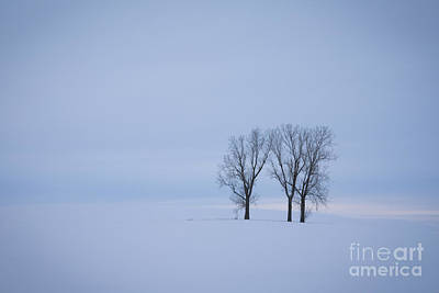 Photograph - Wilderness Of White by Idaho Scenic Images Linda Lantzy