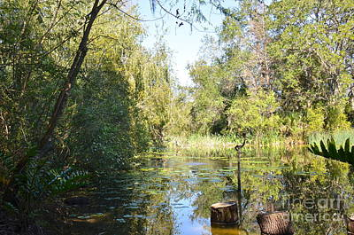 Photograph - Wilderness Pond by Carol  Bradley