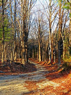 Photograph - Wilderness Trail by MTBobbins Photography