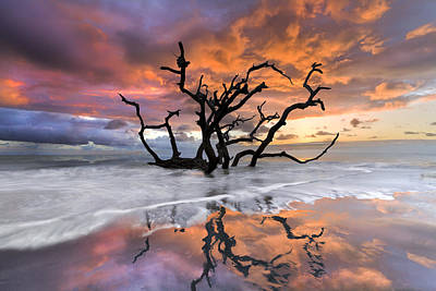 Tree Roots Photograph - Wildfire by Debra and Dave Vanderlaan