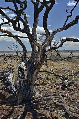 Photograph - Wildfire Scarred Mesquite Tree Skeleton by Allen Sheffield