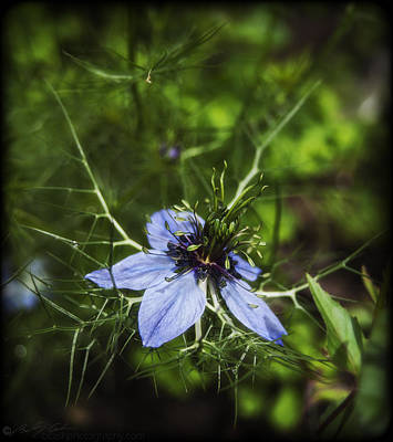 Photograph - Wildflower by Beverly Cash