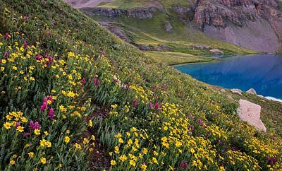 Copyright 2013 By Mike Berenson Photograph - Wildflower Blues From Ice Lake Basin by Mike Berenson