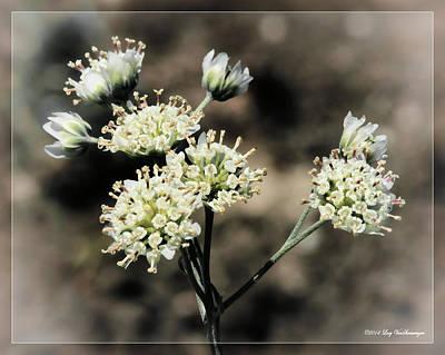 Photograph - Wildflower Bouquet by Lucy VanSwearingen