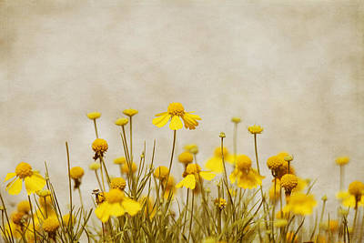 Charming Cottage Photograph - Wildflower Daisies by Kim Hojnacki
