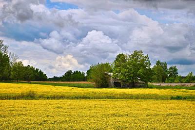 Photograph - Wildflower Field Barn by Greg Jackson