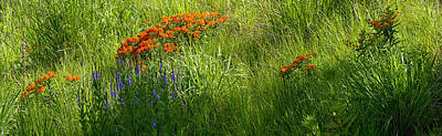 Photograph - Wildflower Field by Theo OConnor