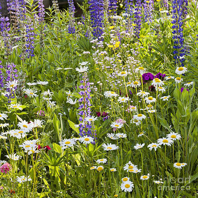 Photograph - Wildflower Garden by Alan L Graham