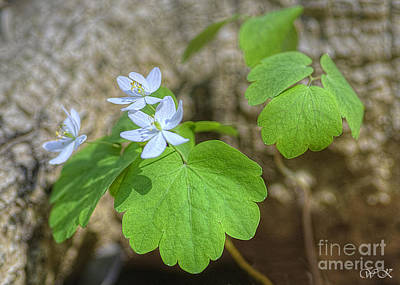 Photograph - Wildflower In Woods by Wanda Krack