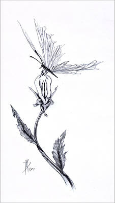 Metaphysical Drawing - Wildflower by Kd Neeley