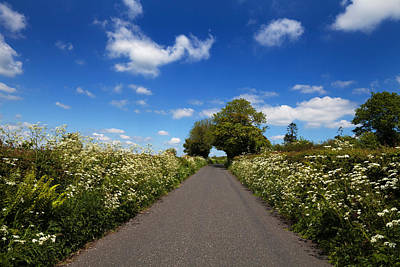 Cow Parsley Wall Art - Photograph - Wildflower Lined Country Road, Near by Panoramic Images