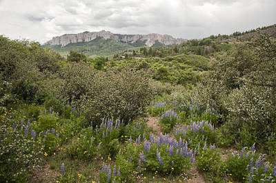 Photograph - Wildflower Meadow In Uncompahgre by Melany Sarafis