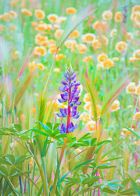 Wildflower Meadow - Spring In Central California Art Print