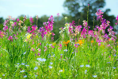 Photograph - Wildflower Meadow Vibrant by Angela DeFrias