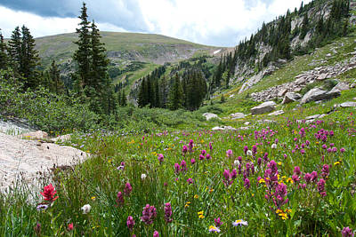 Photograph - Wildflower Meadow With Mountain And Trees by Cascade Colors