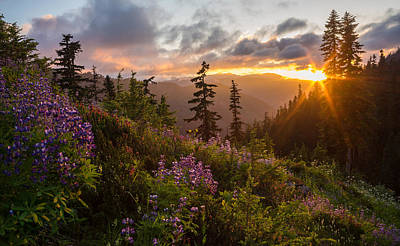 North Cascades Photograph - Wildflower Meadows Sunstar by Mike Reid