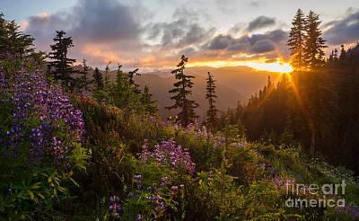 Northwest Photograph - Wildflower Meadows Sunstar by Mike Reid