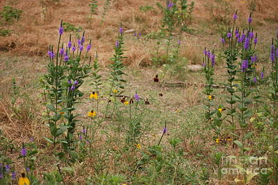 Photograph - Wildflower Medley by Mark McReynolds