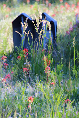 Wildflower Memories Original