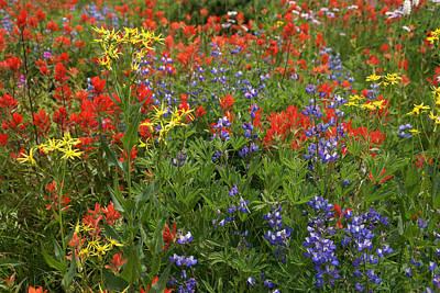 Photograph - Wildflower Mixed 1 by Robert Lozen