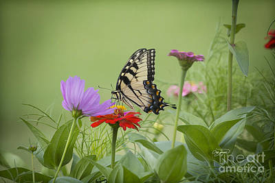 Photograph - Wildflower Nectar by Cris Hayes