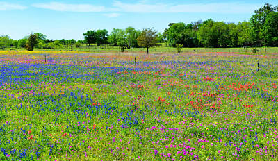 Photograph - Wildflower Paradise Panorama by Lynn Bauer