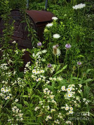 Photograph - Wildflower Reclaim by Lee Craig