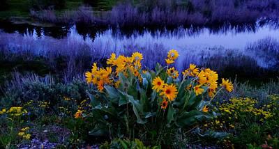 Wildflower Reflection Art Print by Dan Sproul