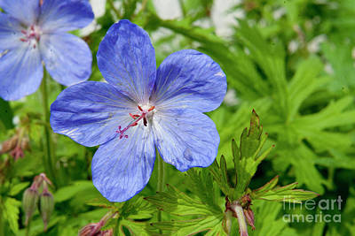 Art Print featuring the photograph Wildflower by Rod Wiens