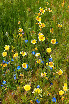 Photograph - Wildflower Salad - Spring In Central California by Ram Vasudev
