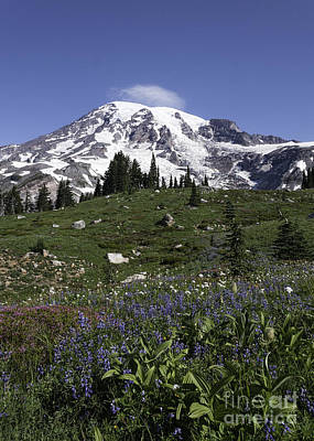 Wildflower Season At Mt Rainier Art Print