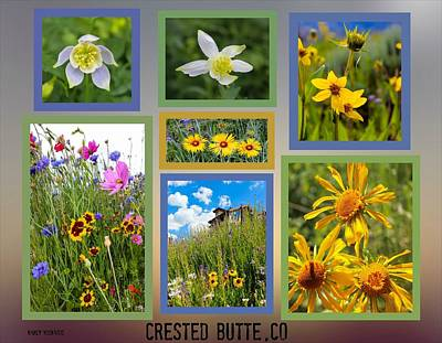 Photograph - Wildflower Season by Nancy Yuskaitis