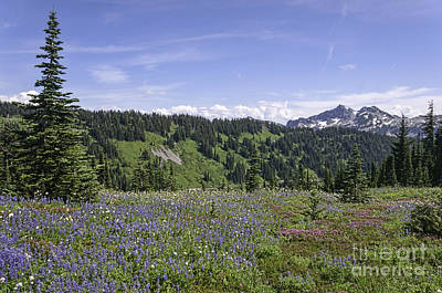 Photograph - Wildflower Vista by Sharon Seaward