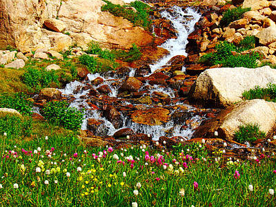 Wildflower Waterfall Art Print by Tranquil Light  Photography