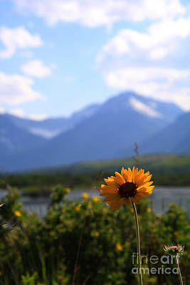 Photograph - Wildflower With A View by Alyce Taylor